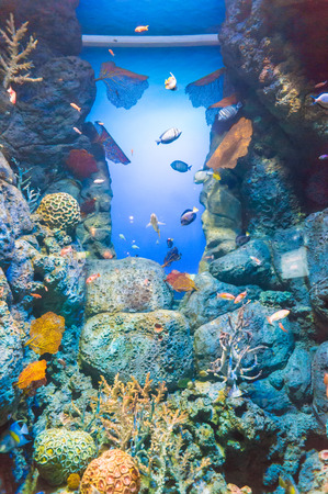exotic fishes: Underwater world of exotic fishes in an aquarium, Singapore SEA