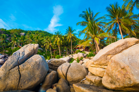 Palm trees on luxury exotic beach in tropical island, Koh tao, Thailand Stock Photo