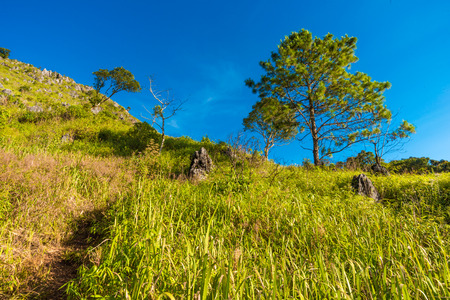 chaingmai: Green scene sub alpine mountain blue sky at Chiangdao, Chaingmai Thailand