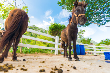 funny donkey: Funny donkey animal in outdoor farm, Prachuapkirikhan, Thailand