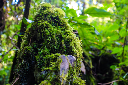 Sun shining into green fern tropical deep forest, Sub alpine mountain Thailand Stock Photo