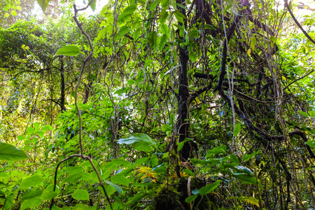 Sun shining into green fern tropical deep forest, Sub alpine mountain Thailand Stok Fotoğraf