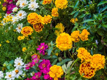 Colorful flower background green leaf, Botany garden