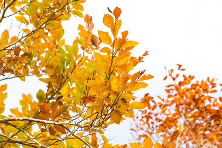 Colorful foliage in the autumn park tree leaves isolated on white Stock Photo