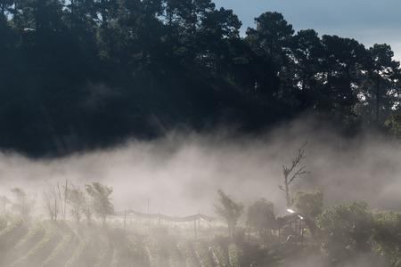 chiangmai: Sunrise with fog on strawberry plantation field in Angkhang highlands, Chiangmai northern of Thailand