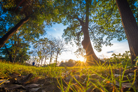 Green grass forground of tree in park while sunset yellow beam light, Beautiful park Stock Photo