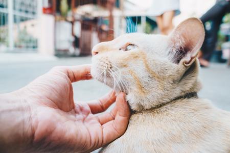 Portrait of cute little cat on street, Funny cat