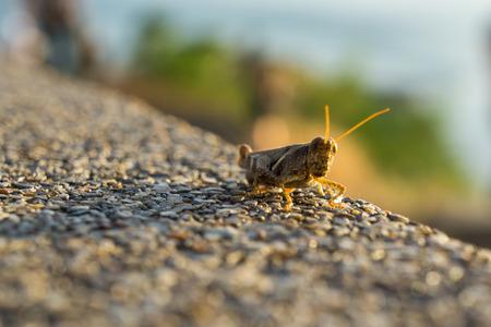 Grasshopper enjoy sunset, Move up concept