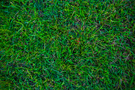 Empty green grass background in garden Stock Photo