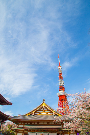 Tokyo red Tower with pink cherry blossom blooming time, Tokyo, Japan
