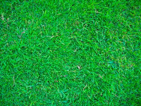 Green nature grass texture, Green scene background