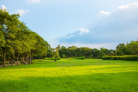 Landscape green meadow tree at nature public park blue sky scene