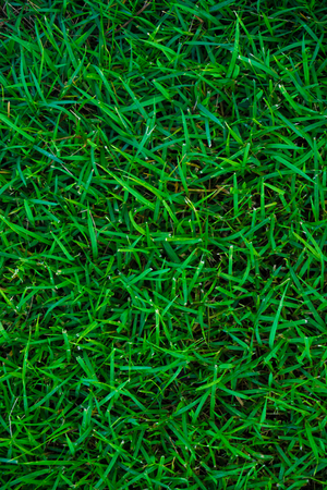 carpet clean: Background of green grass texture, Natural wallpaper Stock Photo