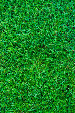 carpet clean: Green grass texture background, Top view of grass field Stock Photo