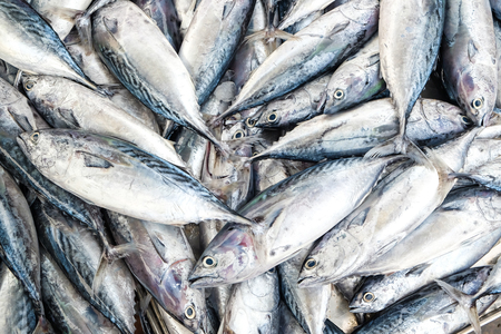 Fresh Mackeral Fish in Fisher Market, Seafood object