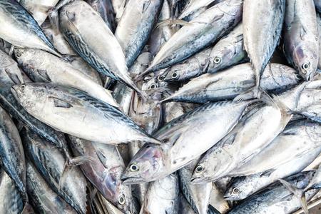 Pescado fresco Mackeral en el mercado de pescados, objeto de los mariscos Foto de archivo