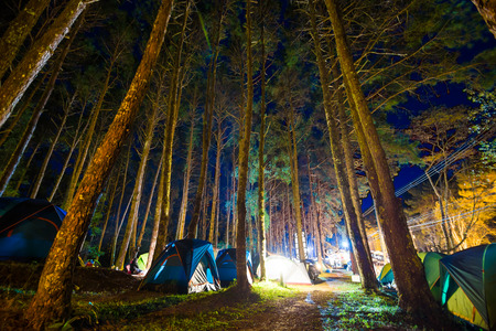 Camping in pine tree forest at night colourfull illuminate tent