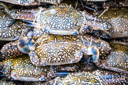 Fresh crabs in fishery market seafood