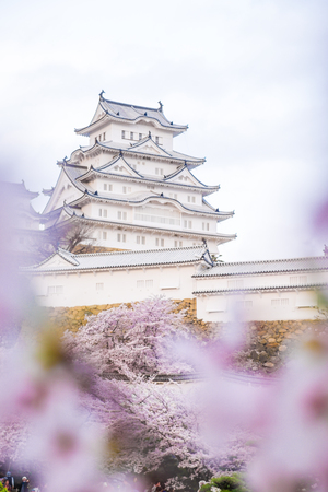 Himeji castle with full cherry blossom one of Japans premier historic, Hyogo, Japan
