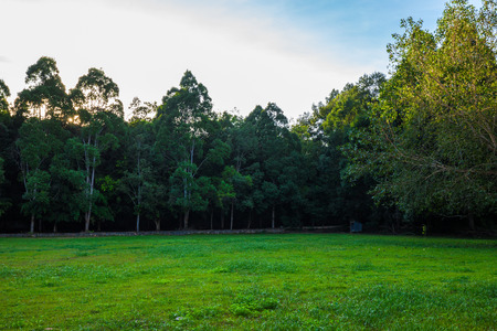 Landscape green meadow with tree in park nature scenery
