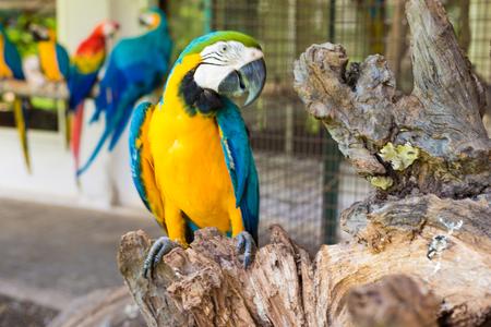 Parrot bird Amazon yellow blue macaw on branch 版權商用圖片