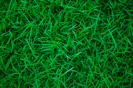 Green meadow grass texture natural background
