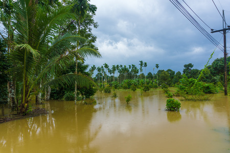 Flooding water in rural plantation, Thailand
