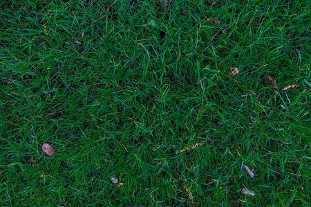 Abstract green grass texture background botanic garden