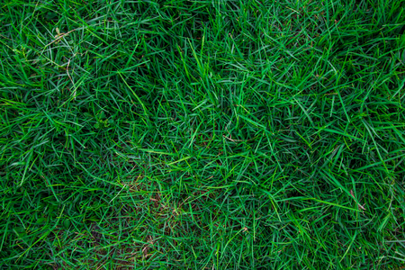 Abstract green grass fresh nature background top view