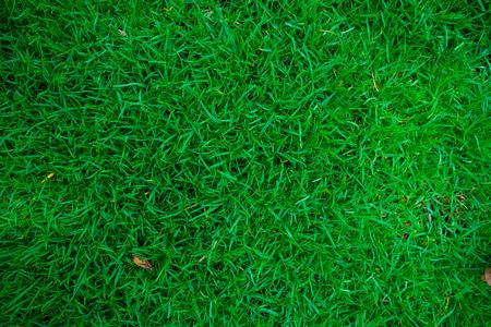 Green nature grass texture nature background Stock Photo