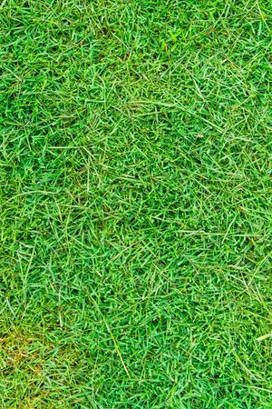 Abstract green nature grass texture in garden