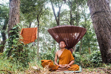 Monk stay meditation in deep forest under tree