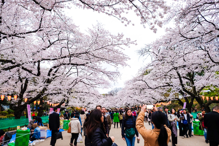 TOKYO,  JAPAN - APRIL 6, 2017: Crowds enjoy the spring cherry blossoms by walking in seasonal at Ueno Park.