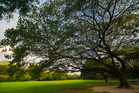 Green lawn with tree sunset in park nature landscape Stock Photo