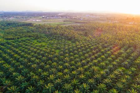 Plantation de palmiers à huile champ vert fond industrie agricole vue aérienne