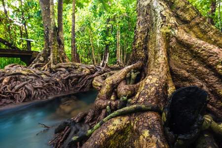 Mangrove environment green tropical forest ecosystem of nature