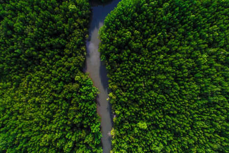 Aerial view lanscape of mangrove tropical forest river to the sea