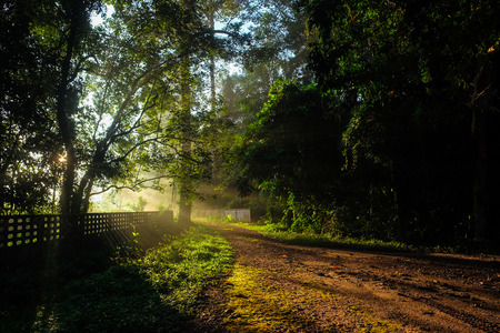 Sun light on walk way tropical forest with fog in morning, Nature landscape background