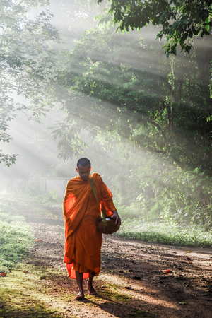 Buddhist monk walking in forest sunset light with fog, Religion nature concept