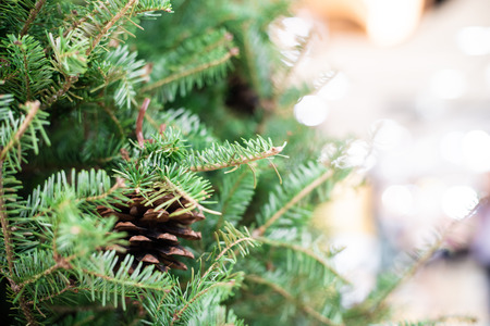 Close up of christmas tree with pine fruit blurred background, Winter festival Stock Photo