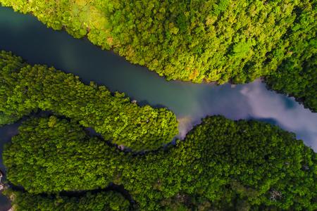Luftaufnahme des tropischen Regenwaldes der Mangroven mit Fluss vom Berg zum Meer, Naturleben