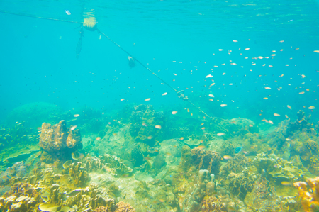 Under water nature of sea life coral reef with fish in turquoise water
