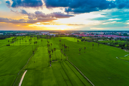 Rice green field aerial view sunset colorful sky with cloud, Agricultural indstry