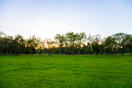 Sunset at city public park with green field and tree nature landscape