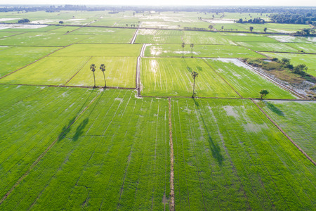 Green rice plantation field aerial view nature landscape