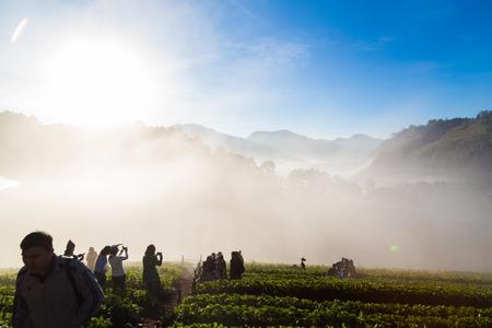 People enjoying sunrise with fog on strawberry plantation field