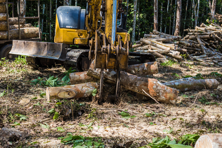 Wood tree cut in forest with machine, Lumber industry