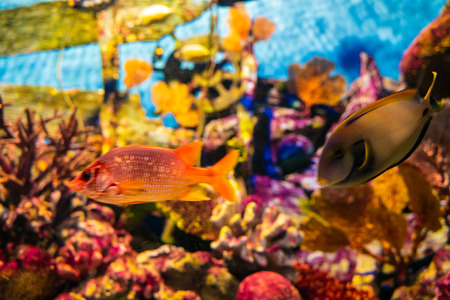 Sea life coral reef tropical fish in aquarium