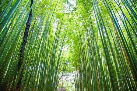 Fondo verde della foresta di bambù in giro turistico di Arashiyama Kyoto nel Giappone Archivio Fotografico