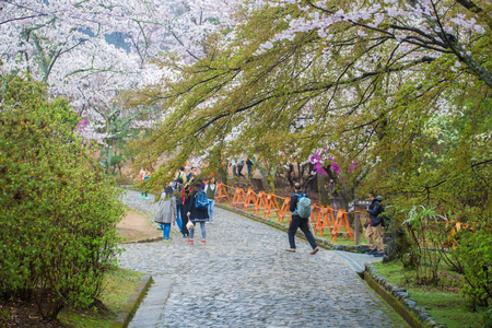 Full bloom pink sakura park april autumn in Kyoto Japan Stock Photo
